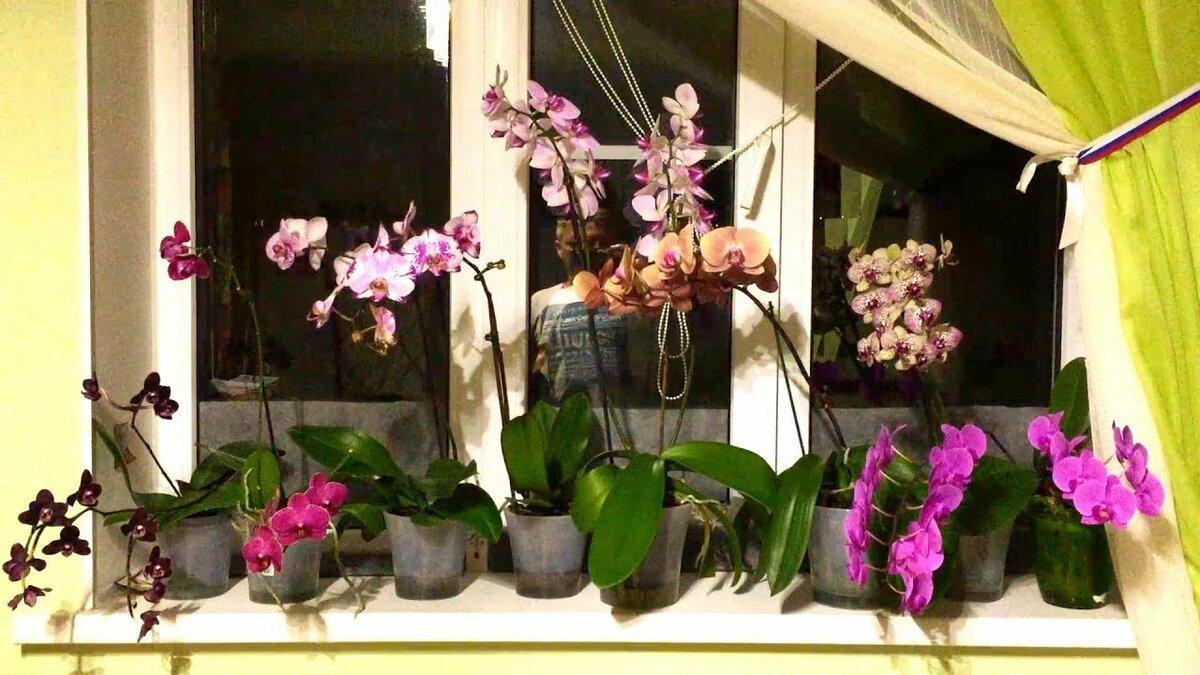 орхидеи в ящике на окне фото этого, читай