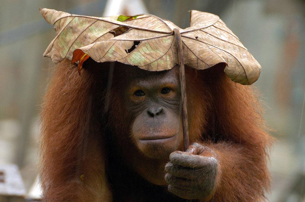 Видео открытка, смешные картинки на тему дождя
