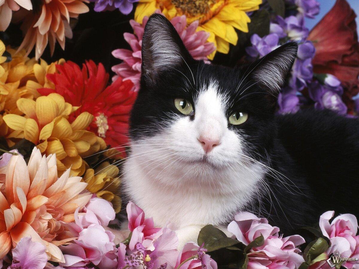 Открытки или фото с кошками