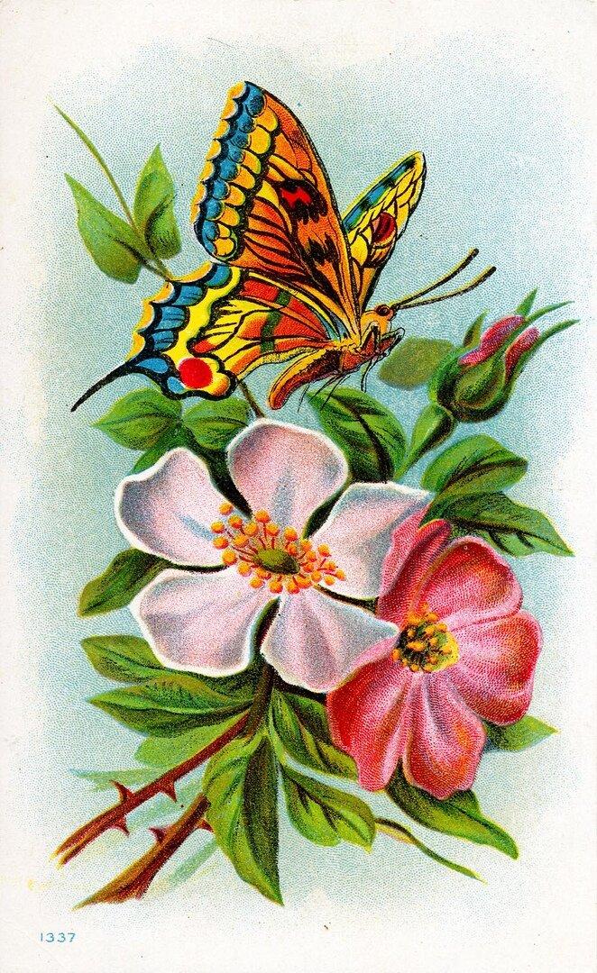 Бабочки на цветах картинки рисунки