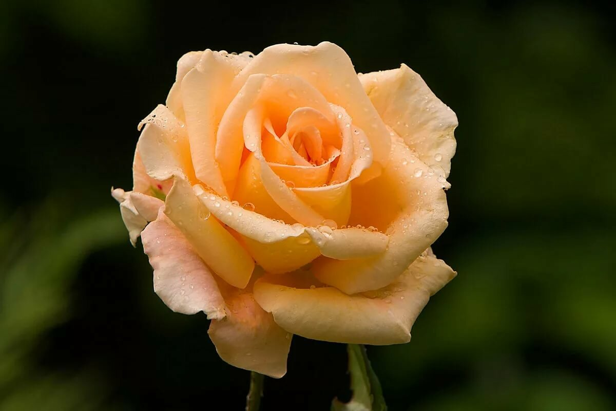 коленях картинка лбми роза нечасто делится подробностями