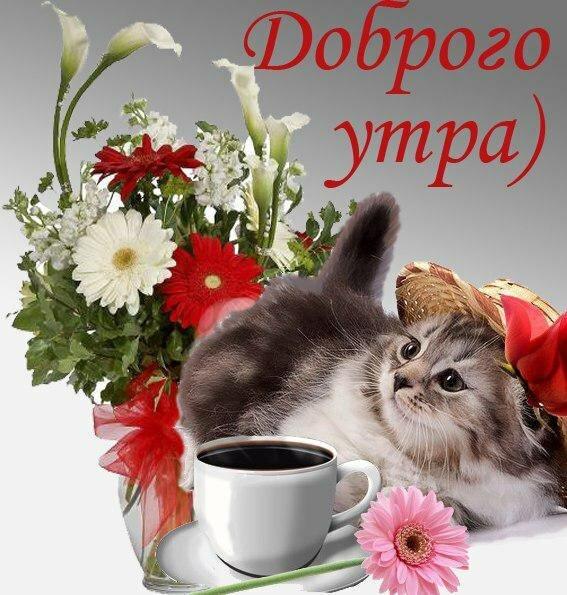 Милые картинки привет доброго утра