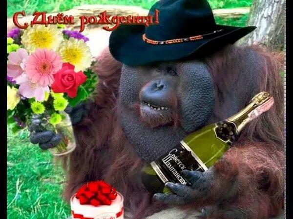 Картинки с днем рождения прикольные с обезьянами, женским именем