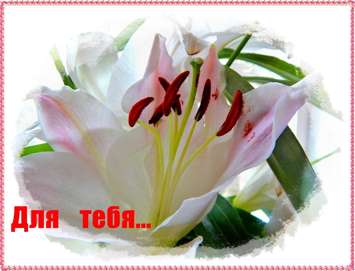 Майнкрафт, красивые картинки для любимой девушки с добрым утром с лилиями