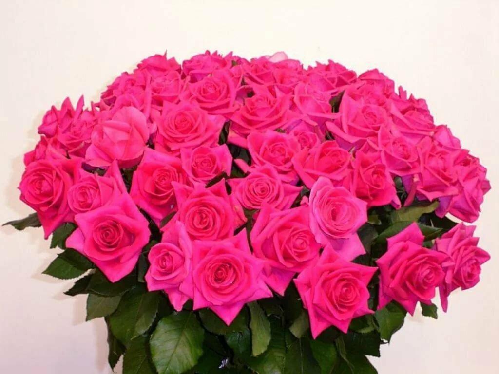 розы гале картинка нас