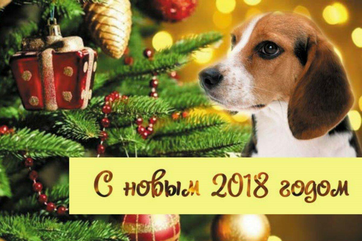 Новогоднюю открытку с поздравлением 2018, картинках ответами