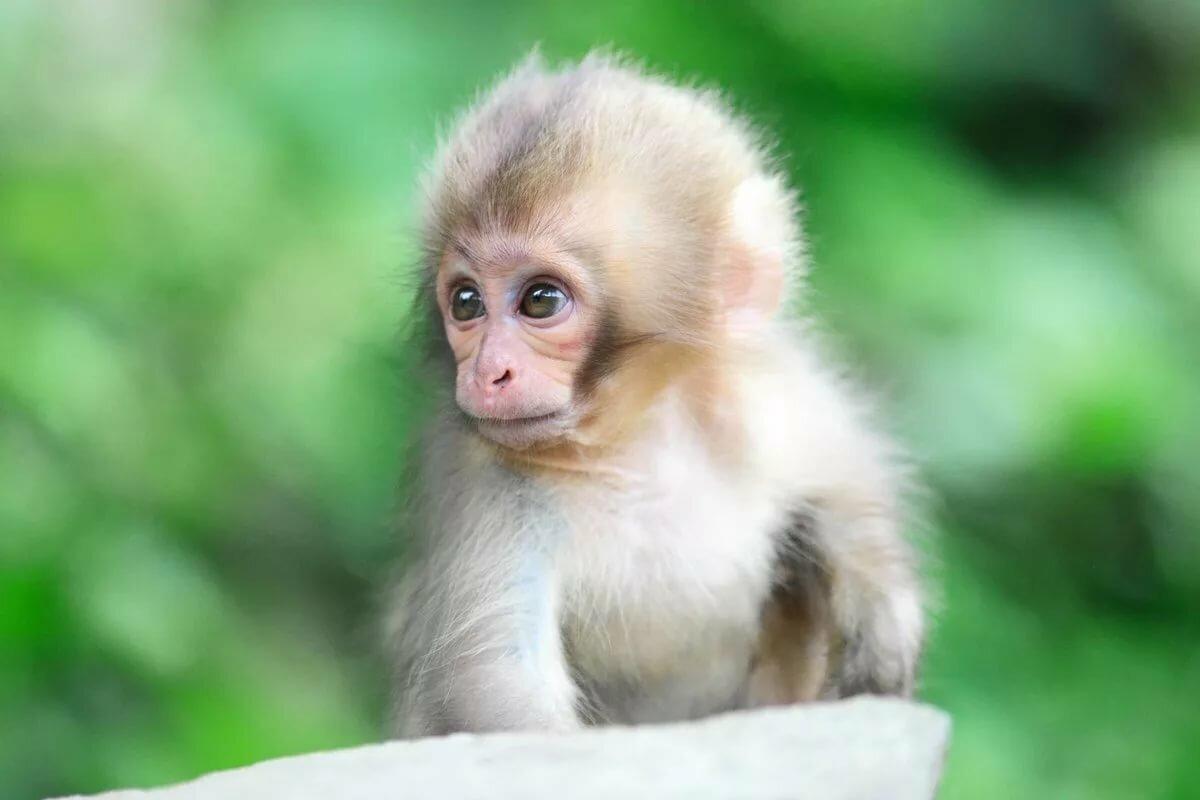 Прикольные обезьянки картинки