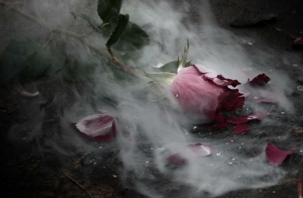 картинки разбитой любви розы мадера