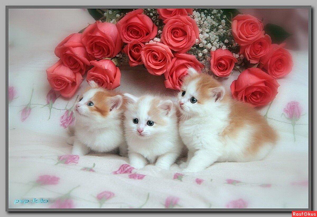 Открытки с любовью и нежностью для тебя котята