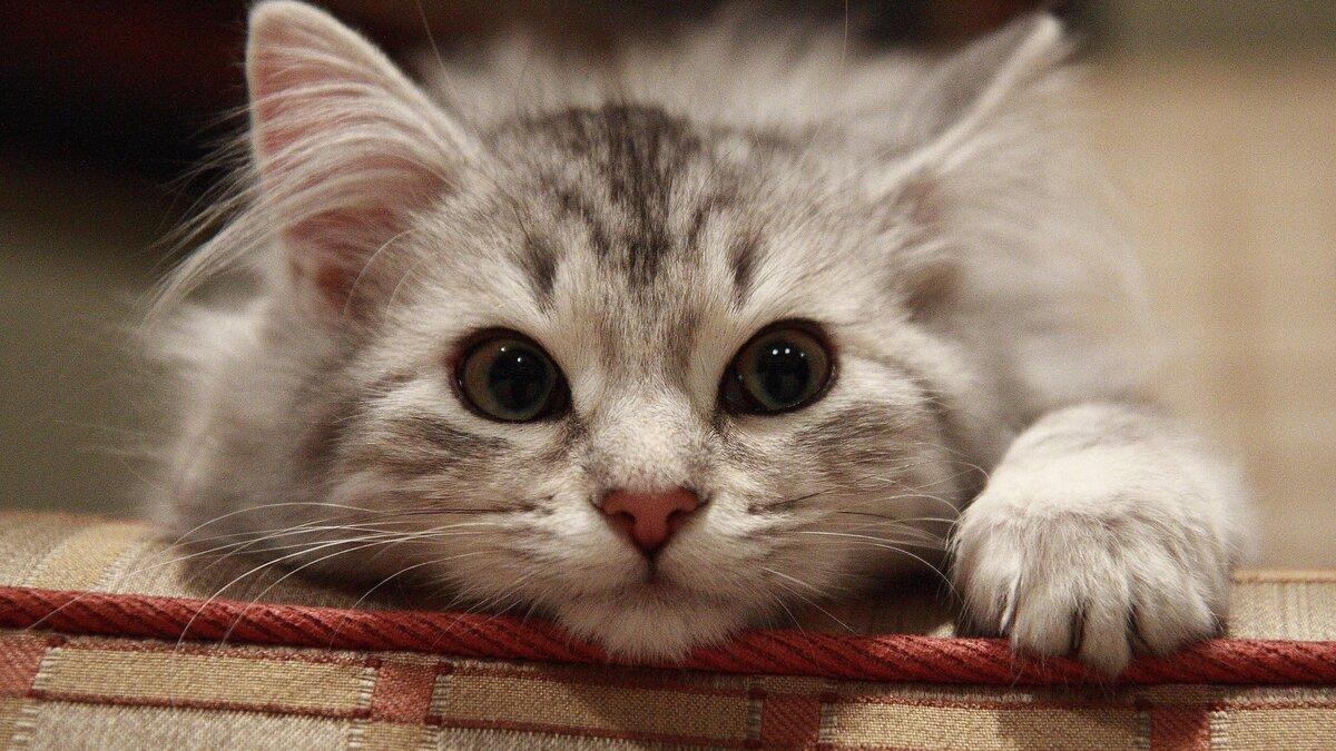 Очень милые и смешные картинки котов