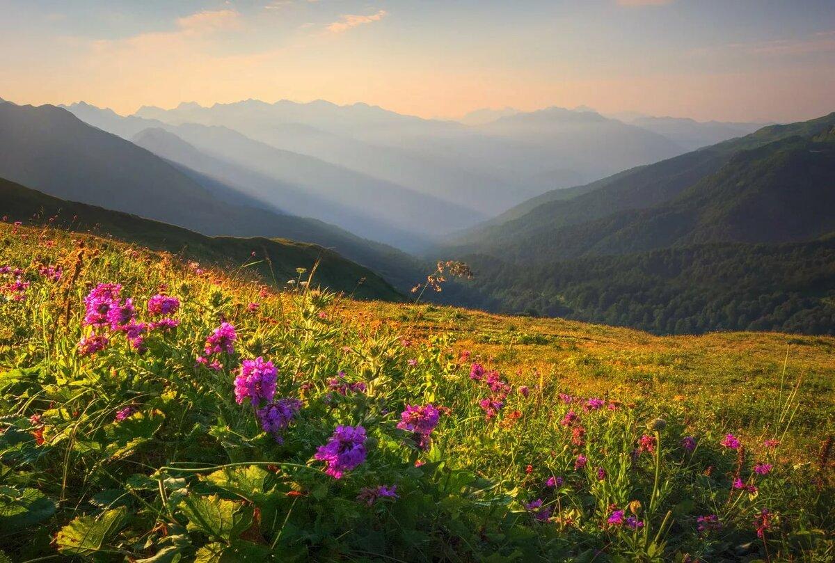 Цветущая долина картинки