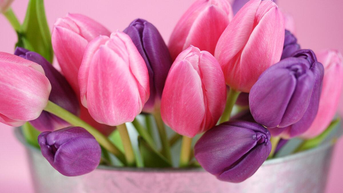 Поздравительные, картинки на 8 марта хорошее качество