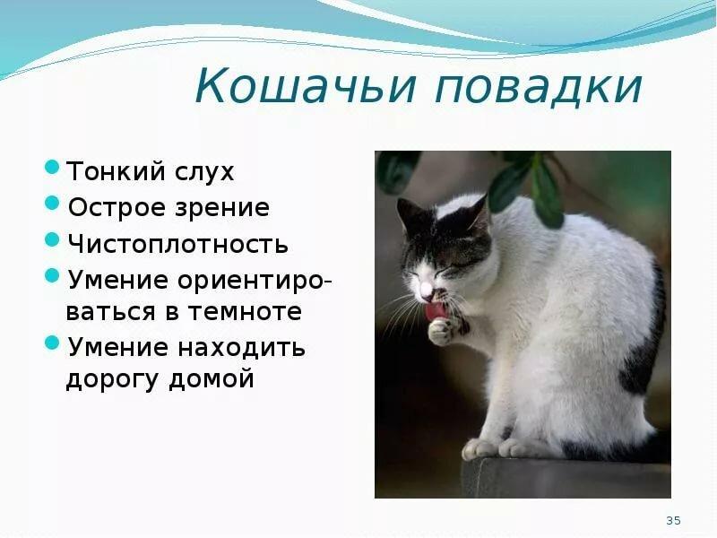 Сообщение про кошек и картинки