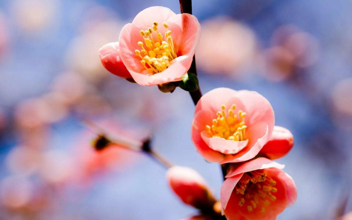 Днем, цветы картинки весна