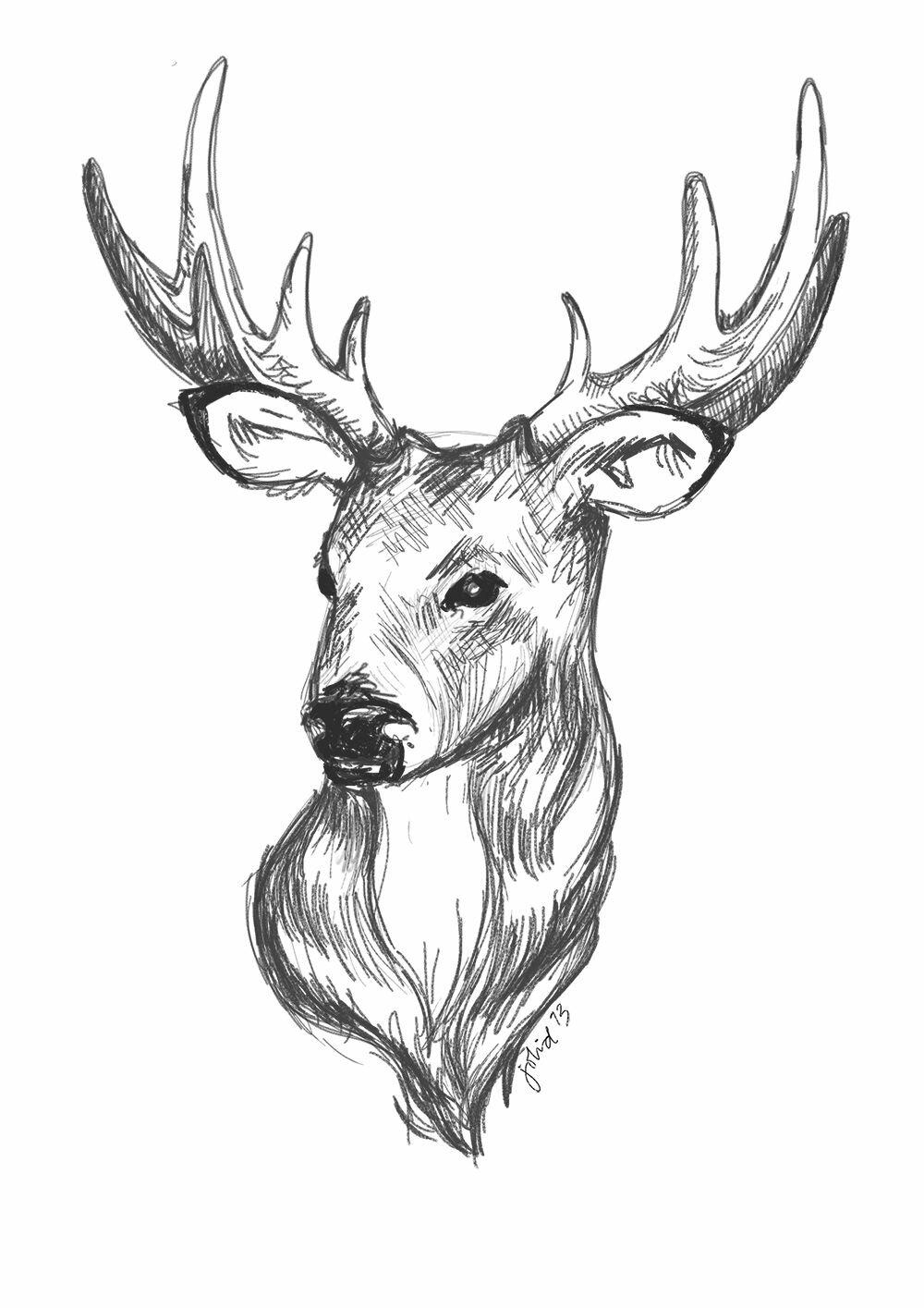 Картинки олени для срисовки, елену днем