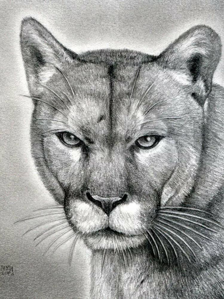 Картинки рисовать звери