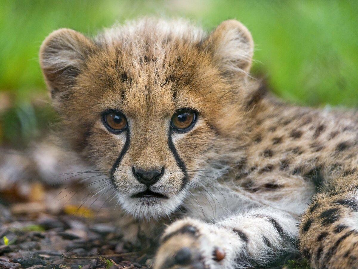 Животные фото красивые