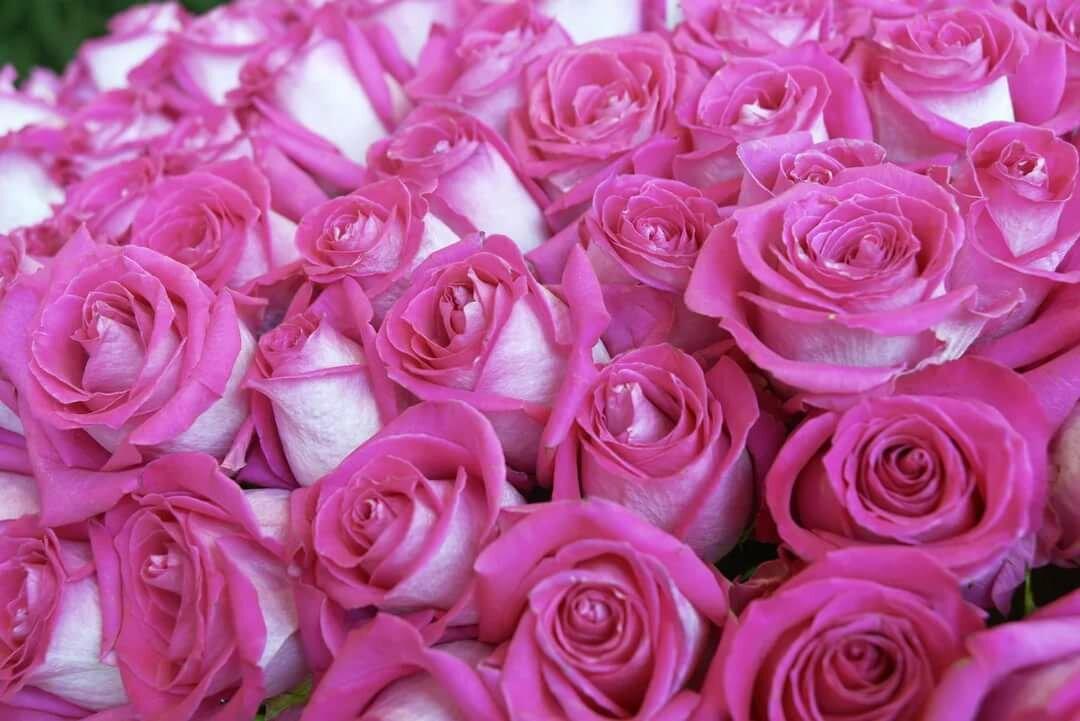Картинки красивые розовые розы гифы