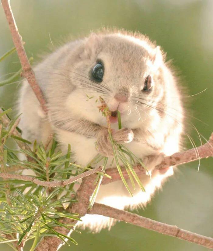 Картинки самые красивые животные на свете, открытки
