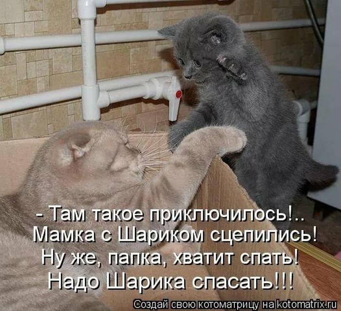 Приколы с надписями в картинках с животными до слез