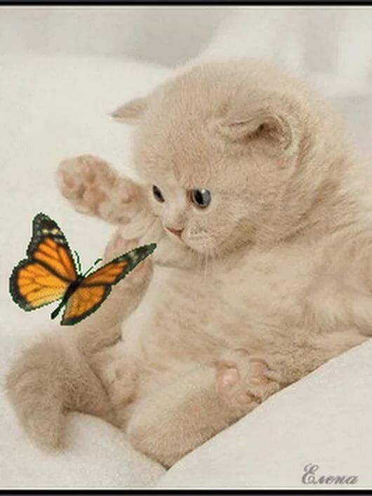 Милый котенок живая картинка