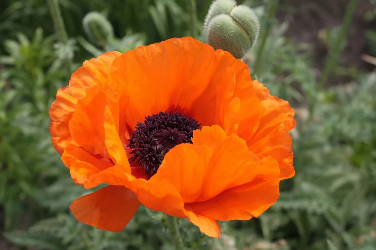 Комнатный цветок похож на пальму фото страница открытки