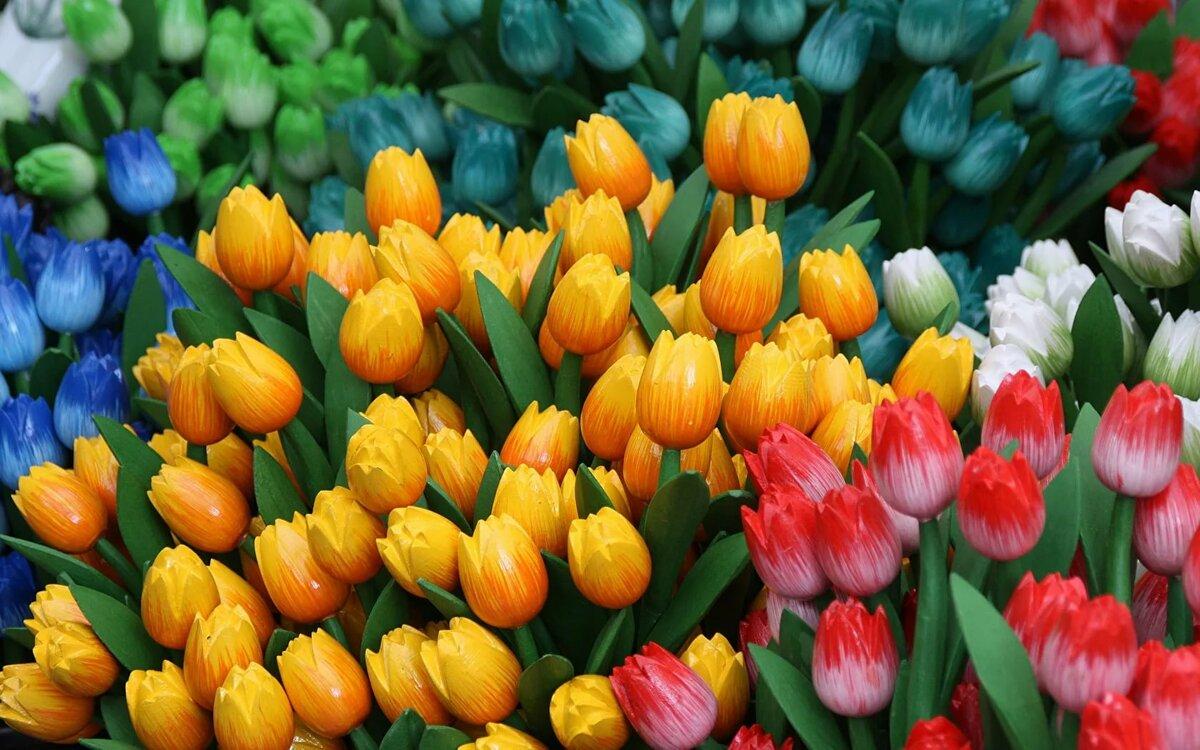направленное действие красивые фото тюльпанов большие что успела