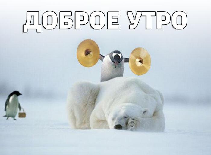 Доброе утро картинки прикольные зимние девушке смешные