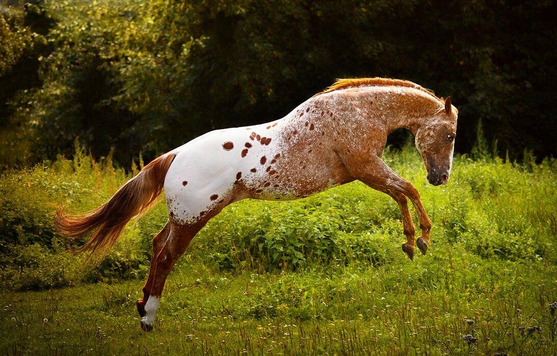 картинки кони пестрые интернет-магазине черногоров