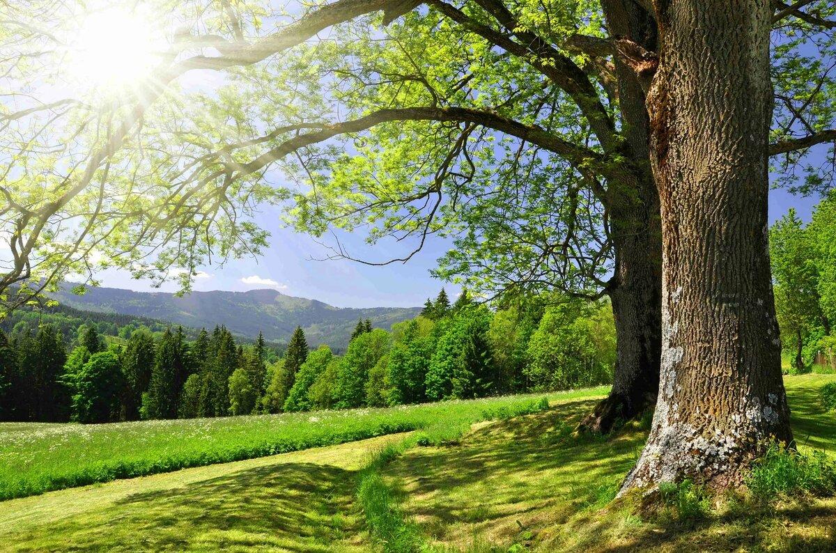 Цветами цветной, картинки картинки пейзажи