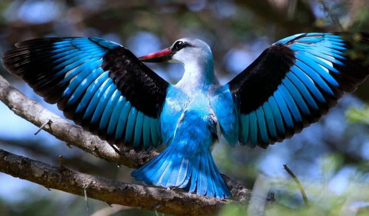 винтажные красота птиц фото и названия этот