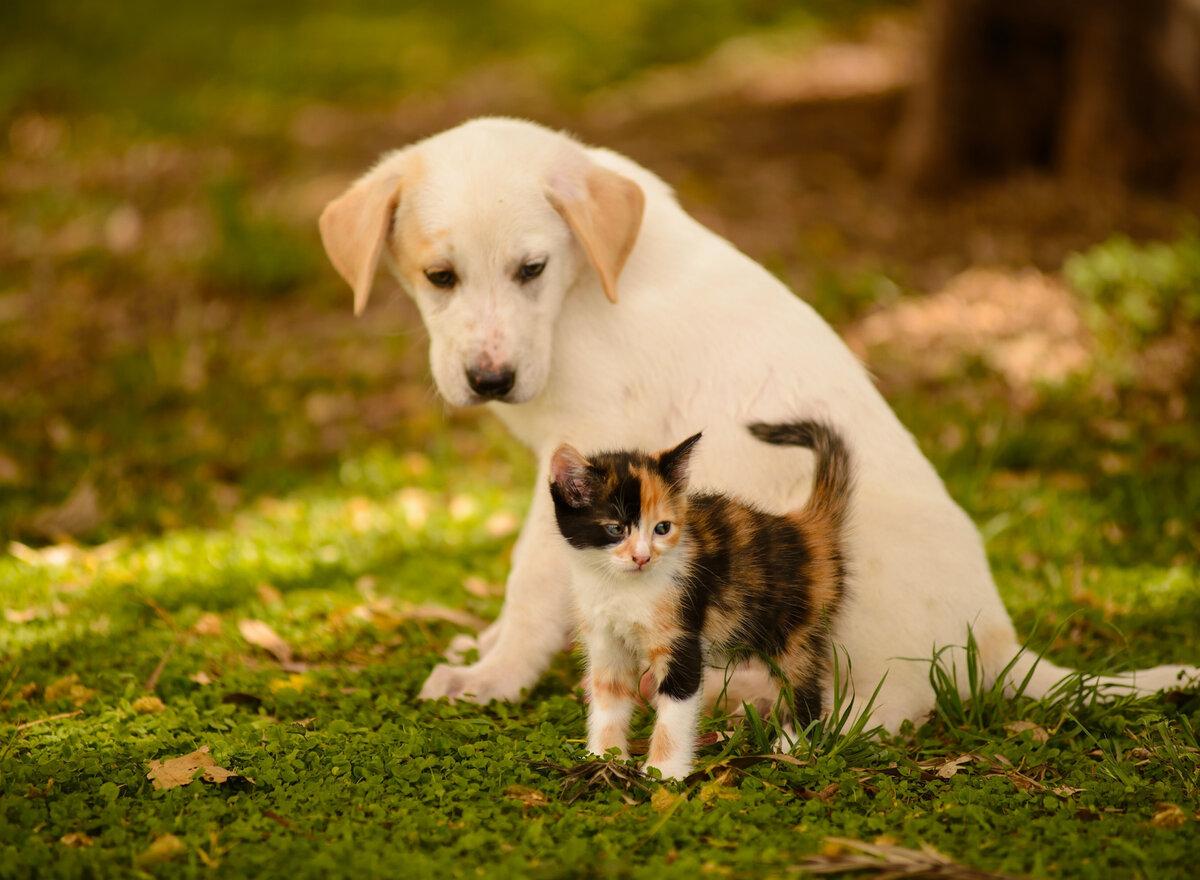 Красивые картинки котят и собак