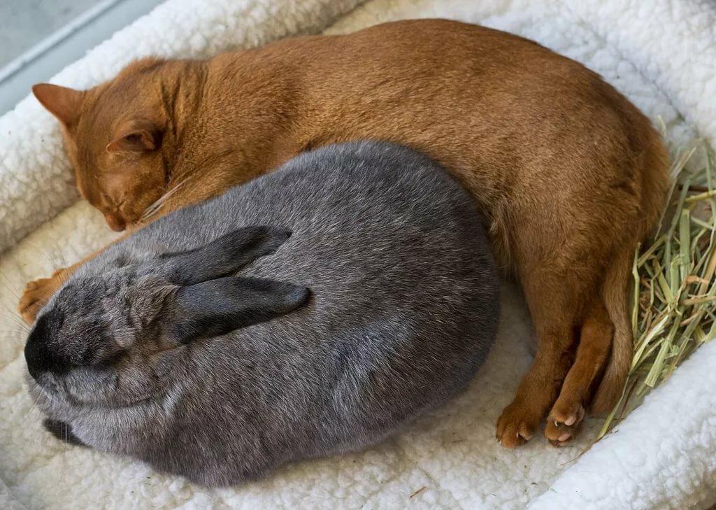 ребенка картинки спящего котика и зайчика вместе гамака