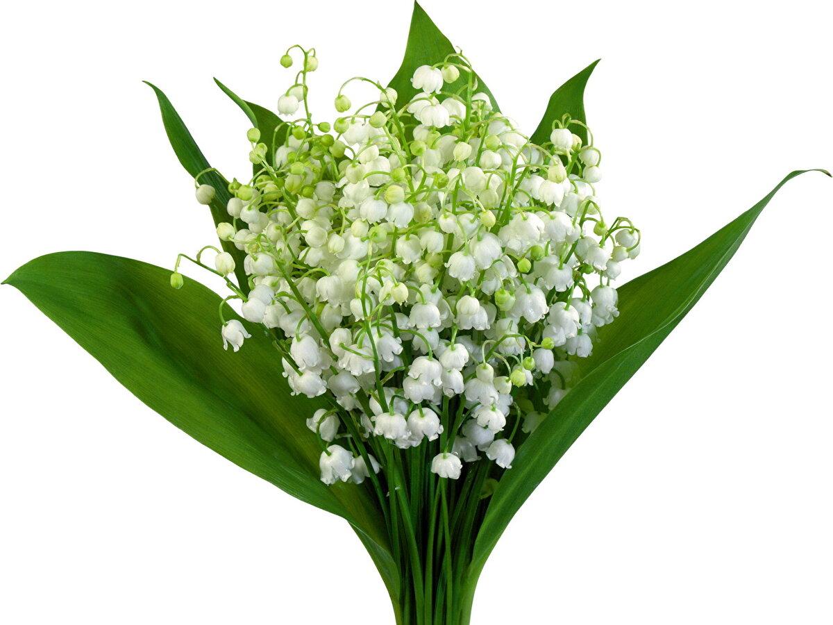 Открытка цветы ландыши, самодельная марту