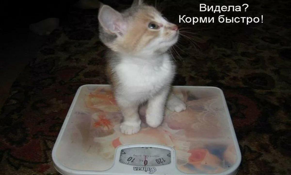 Самые смешные картинки с надписями до слез про кошек, целую