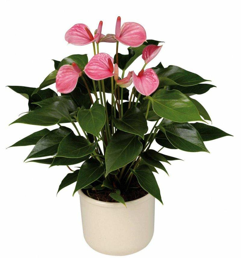 Где купить цветы на заказать комнатные растения