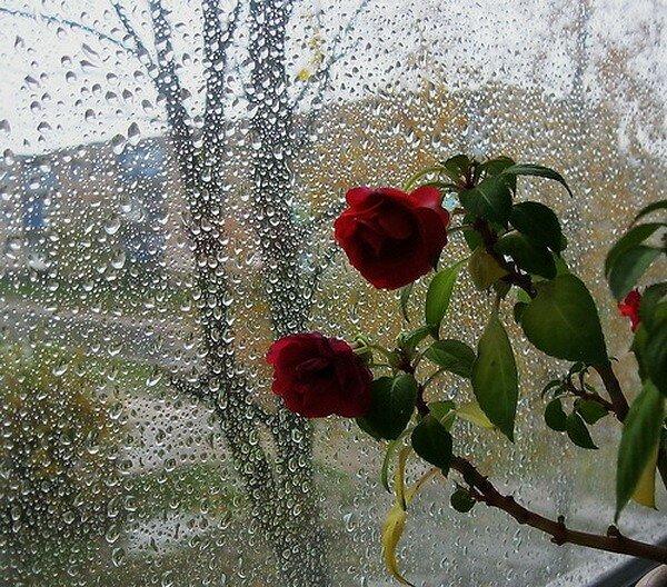 Открытки льет дождь