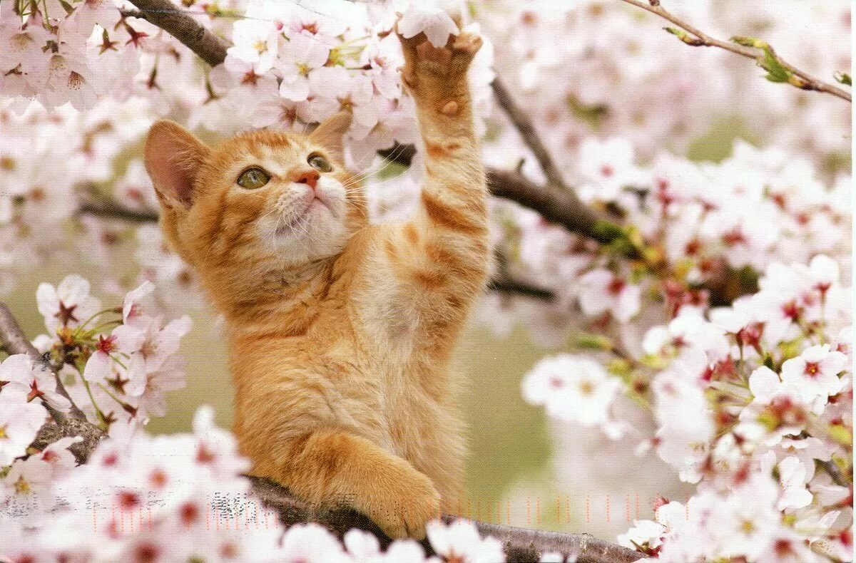 Прикольные и красивые картинки весны