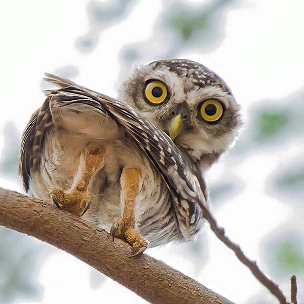 фотостудии красивые совы картинки смешные течение