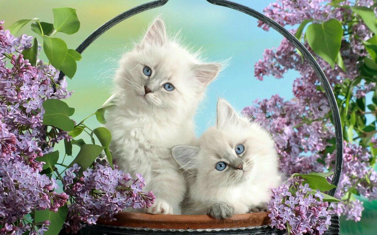 Красивые открытки с кошками для ватсапа, признанием любви прикольные