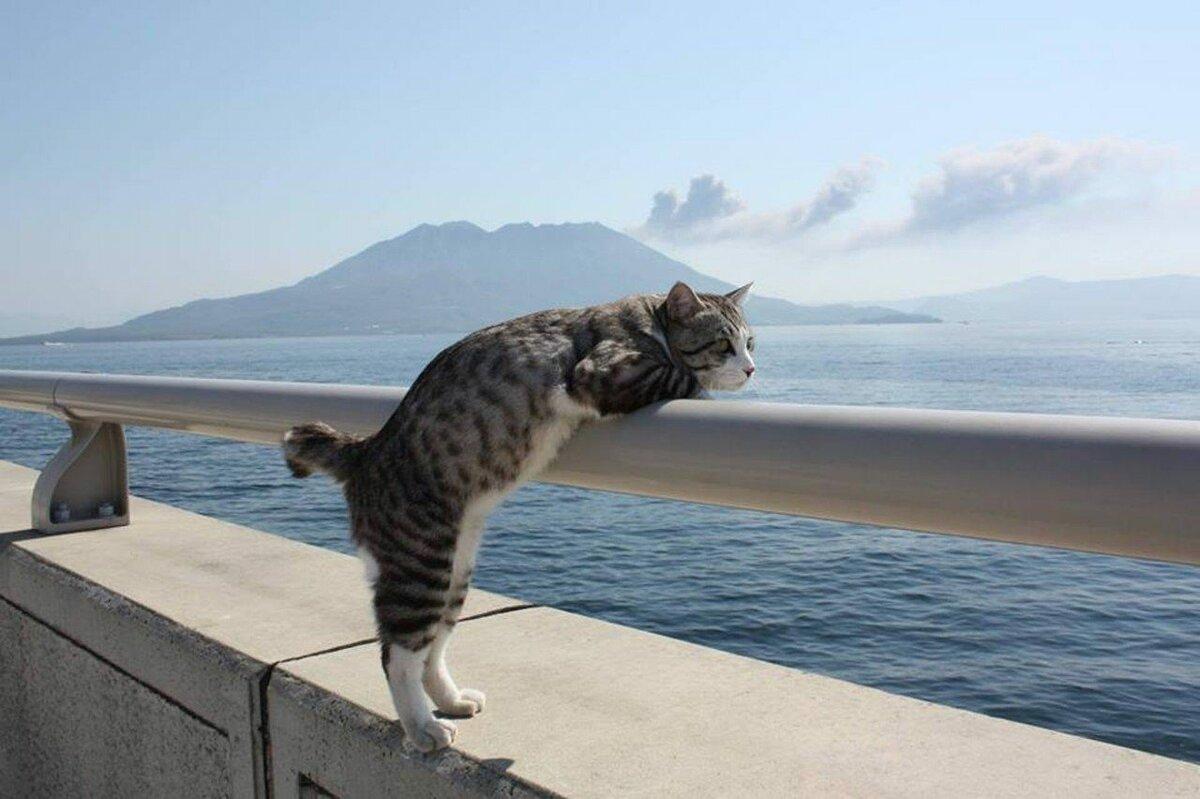 Смешные картинки поехали на море, картинки пожеланиями спокойной