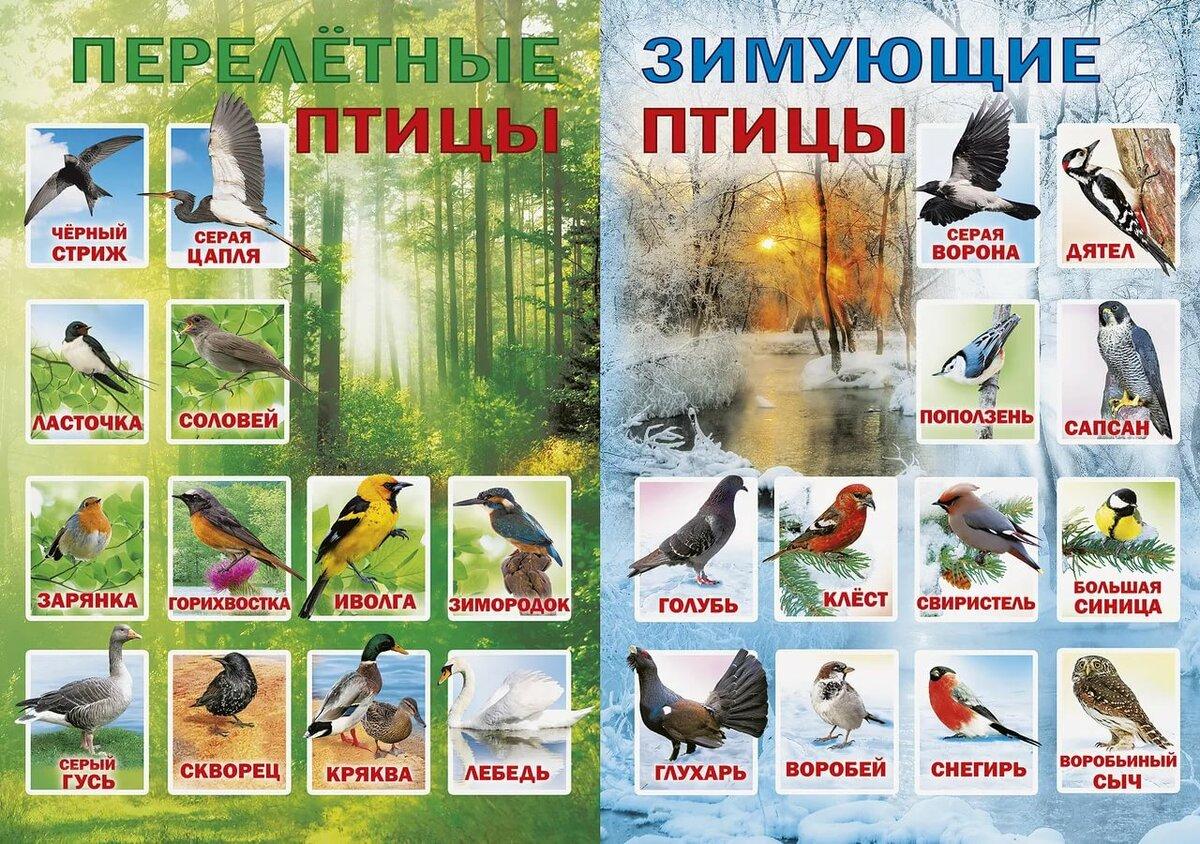 Перелетные птицы для детей в картинках