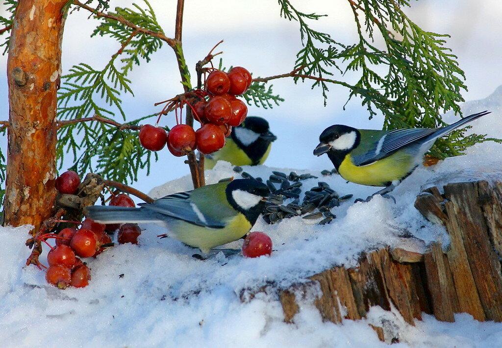Картинки жизнь птиц зимой