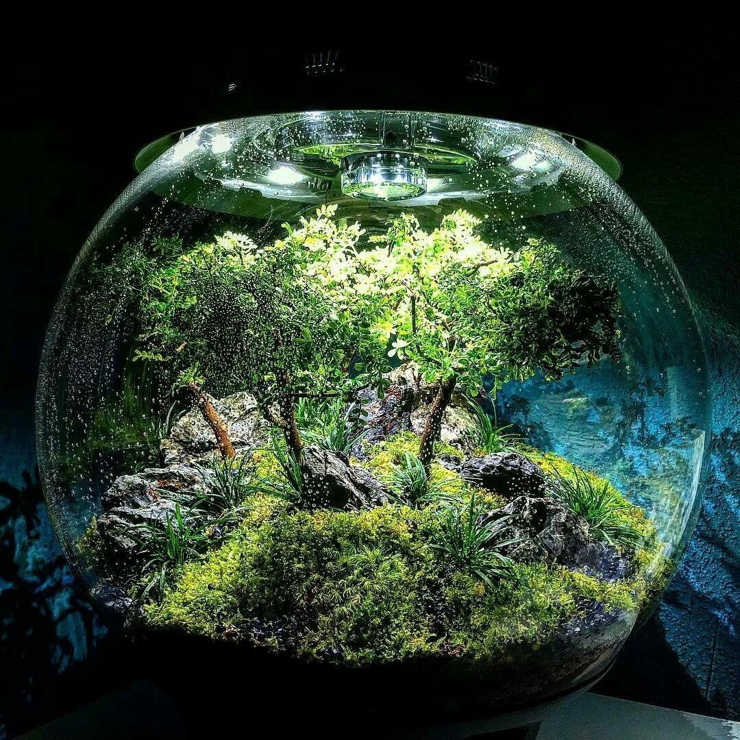 фото оригинальных аквариумов организациях ип, которых