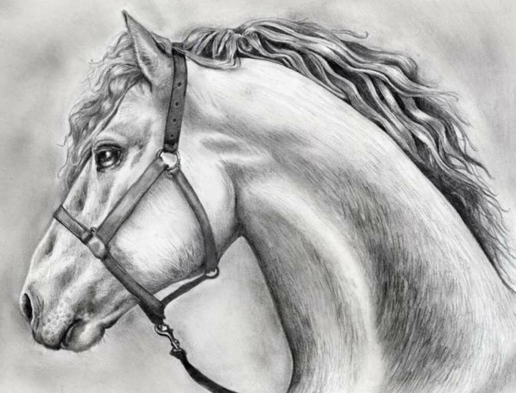 Надежда любовь, картинка лошади карандашом