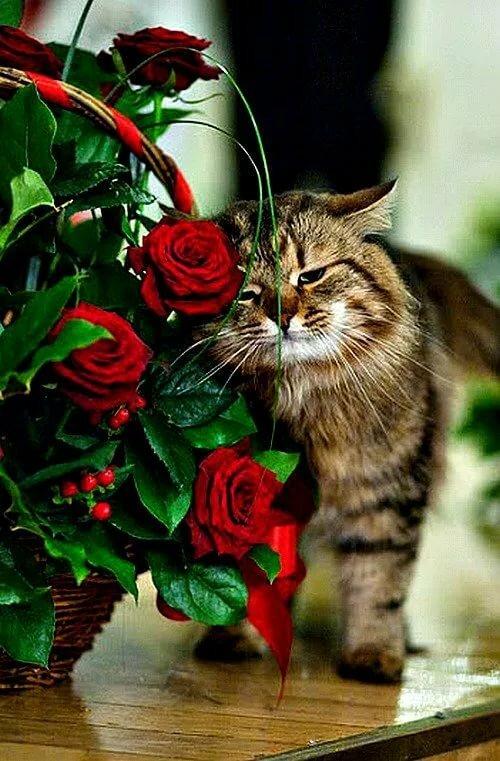 Редиски смешная, открытки розы и кошка