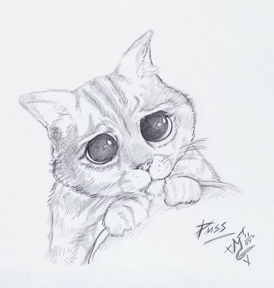 Рисунки для срисовки кошки карандашом, картинки про