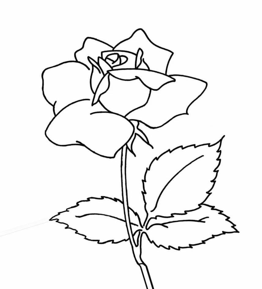 Новогодняя, раскраски цветы для детей 3-4 лет распечатать