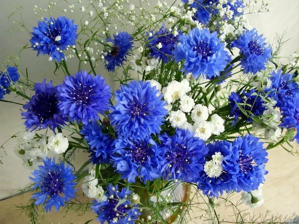 Поздравлением моряка, открытки с днем рождения цветы полевые