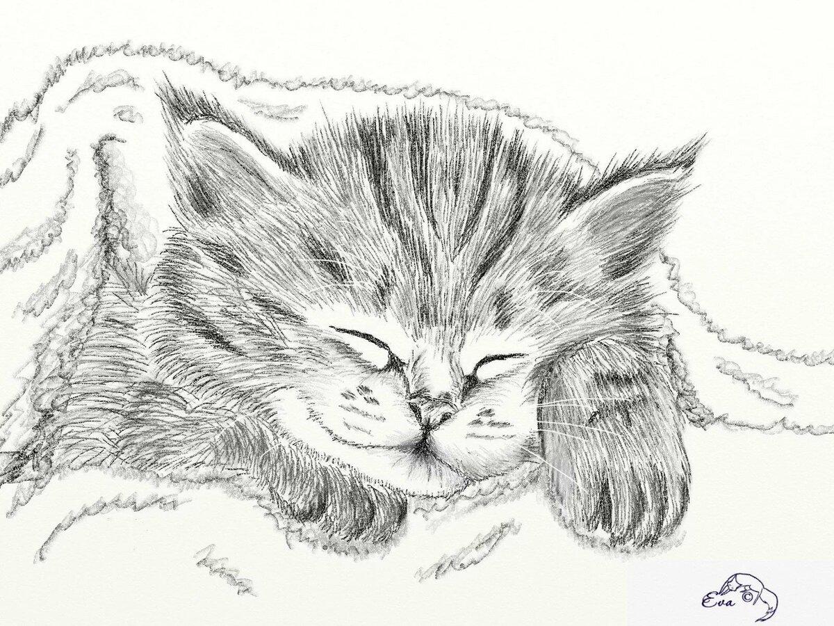 Картинки кошек рисунки для срисовки